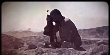 نماهنگ زیبای «جان بیدار» با صدای مانی رهنما